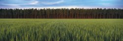 Panorama photograph of a field and forest